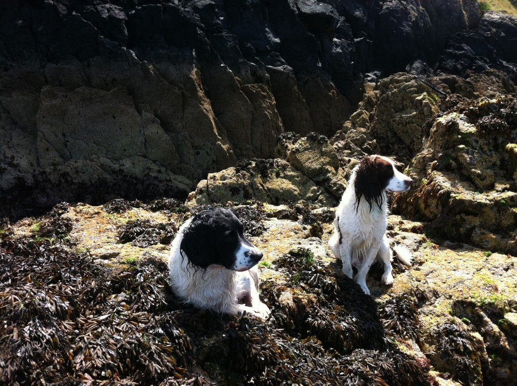 Old sea dogs